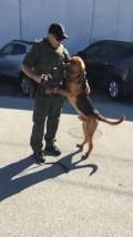 Brandon & bloodhound Rodney