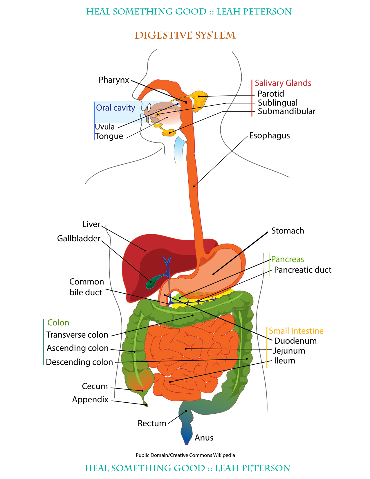 Chart Digestive System Heal Something Good