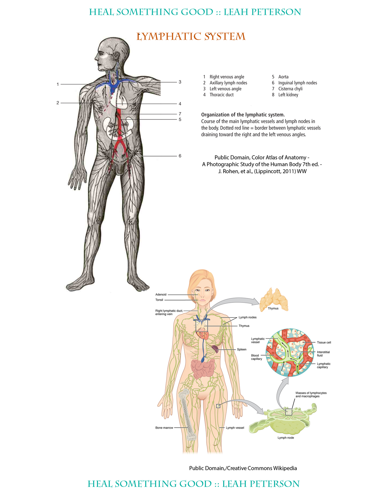 Chart Lymphatic System Heal Something Good
