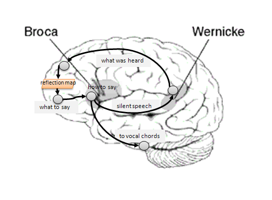 The Neuroscience of Sapience .  The internal conversation loop (phonological loop) involves the listening (hearing language processing) in Wernicke's area receiving echoes from the speech production area of the frontal lobe, Brocca's area. The same channels from Brocca's area, along with control signals from the cerebellum, go to the vocal chords, tongue, diaphragm and other voicing muscles, but are presumably blocked when you are thinking to yourself. When you are talking to yourself you probably get both actual sound inputs along with internal (non-voiced) inputs in Wernicke's area.  Credit:  George Mobus.  The University of Washington Tacoma, Institute of Technology.