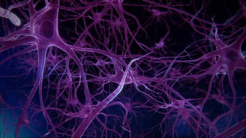 Penn study uncovers genetic variation that predicted type and rate of physical decline in patients with Parkinson's disease  - neuroinnovations