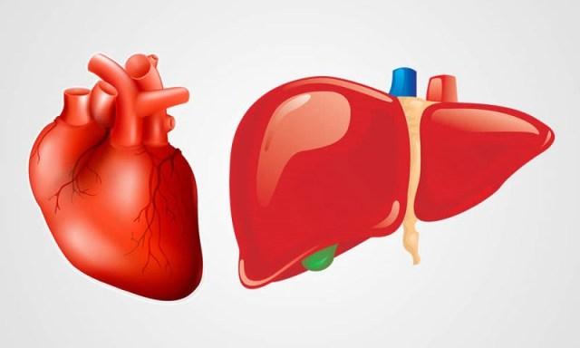 Damage to tiny liver protein function leads to heart disease, fatty liver - healthinnovations