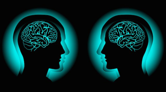 twin-study-helps-unravel-the-genetic-blueprint-of-the-human-brain-neuroinnovations