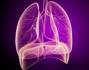 Lungs and diaphragm