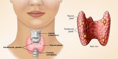 hypothyroidism-low-thyroid