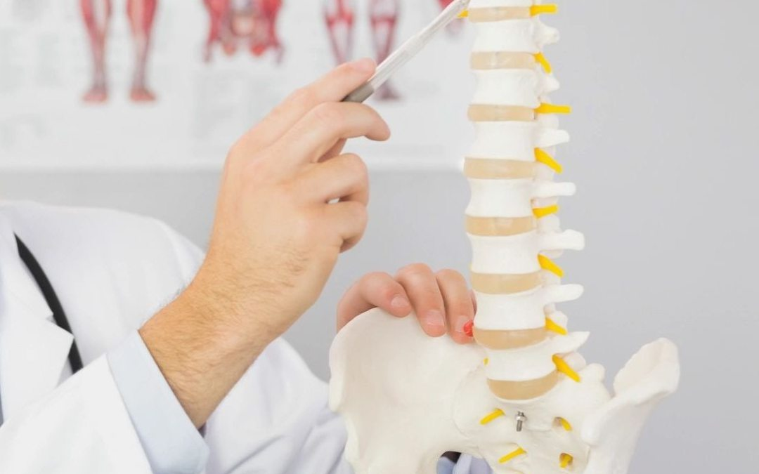 Chiropractor Palos Heights IL