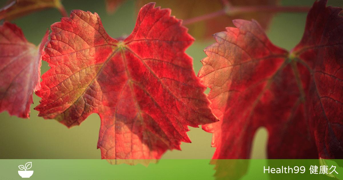 You are currently viewing 【成份功效】紅葡萄葉是什麼?可消腫、促進血液循環紅葡萄葉的功效與價值