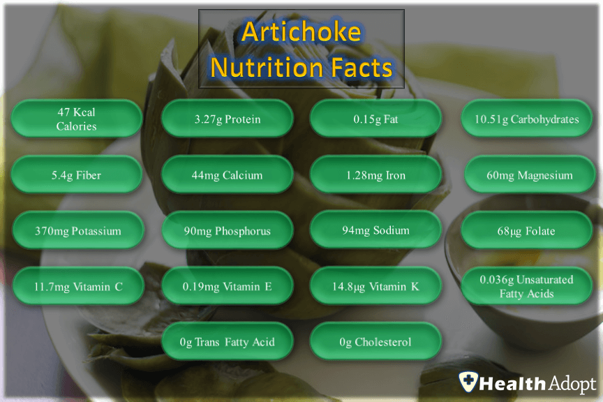 Artichoke Nutrition Facts And Nutrients Value