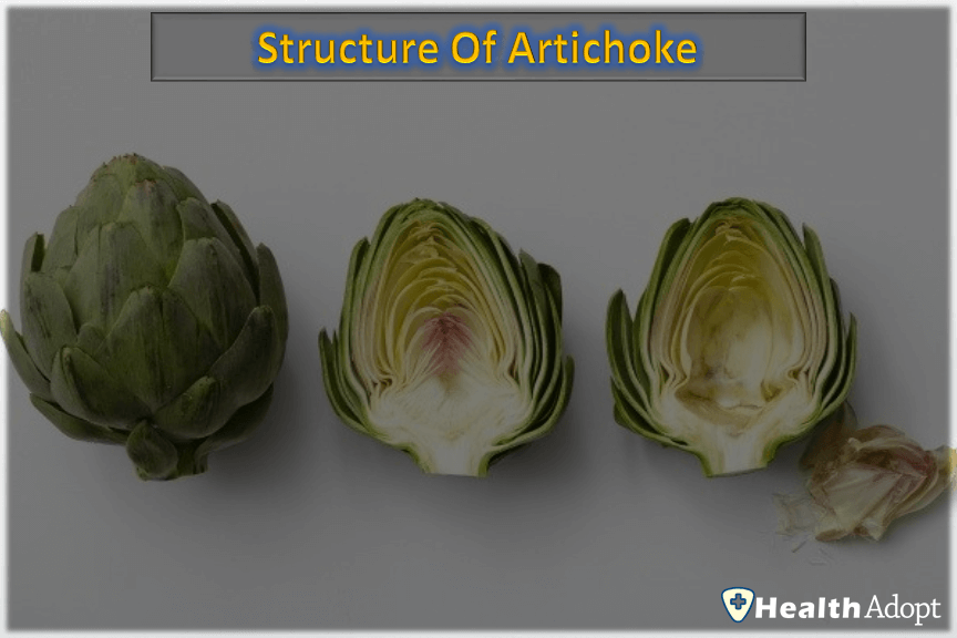 Structure Of Artichoke How To Cook It