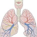 Painkillers and the lungs