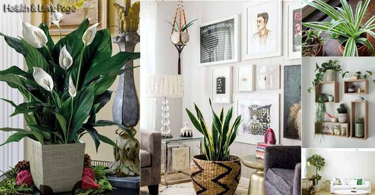Improve the Air Quality in Your Home with These Oxygen Bomb Plants