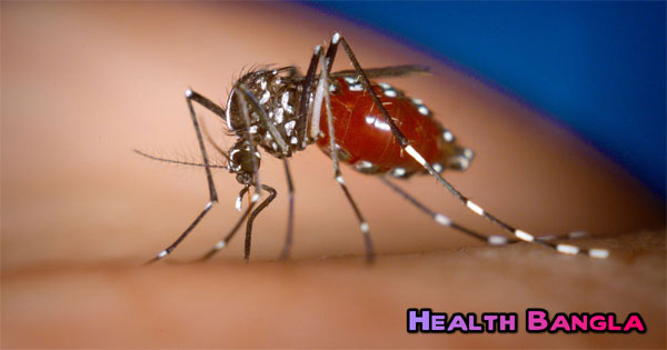 Aedes-Mosquito