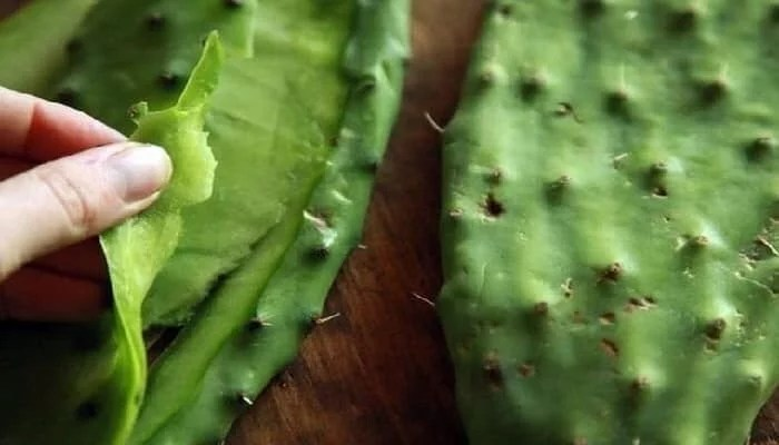Top 15 Health Benefits Of Cactus Leaves