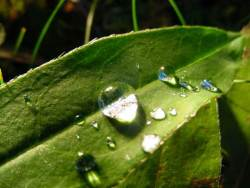 drops-of-water-on-leaves-ws