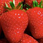 Day Neutral Strawberries