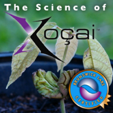 The Science of XO Health Claims In Punta Gorda Florida