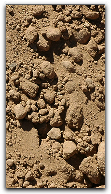Health Benefits of Punta Gorda Dirt!