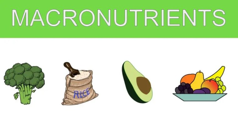 Macronutrients and Health | El Paso TX Chiropractor