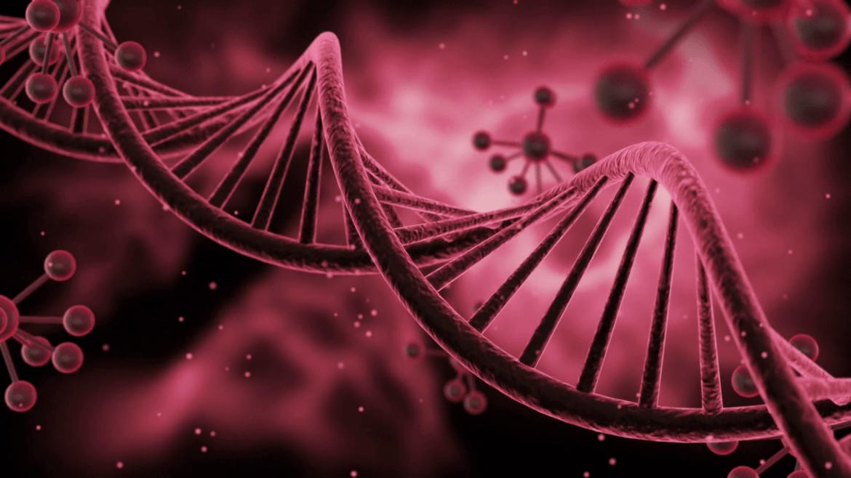Genetic Impacts of Estrogen
