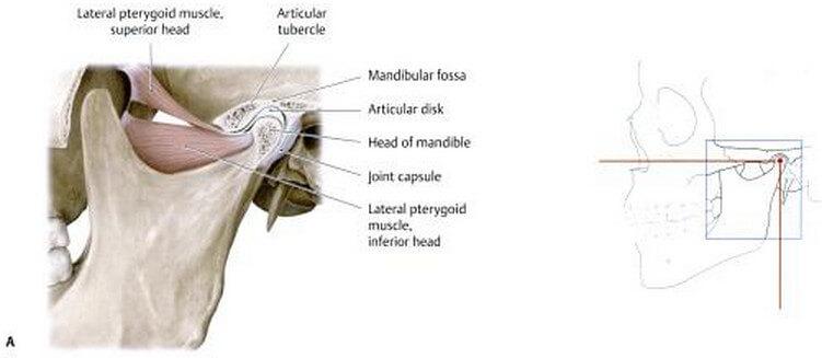 Image result for mandibular fossa