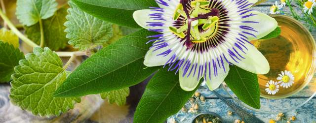 Passion flower and Chamomile natural remedies for teenage anxiety