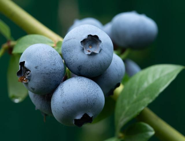 fruit on vine