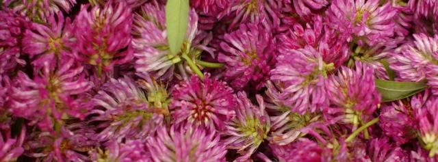 fresh herbal flowers