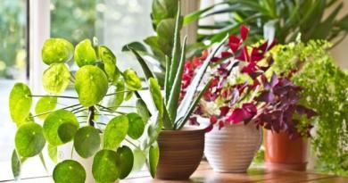 घर में लगाए पौधे करेंगे सेहत की निगरानी