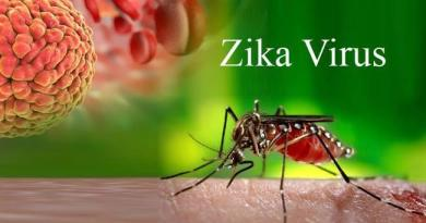 Zika virus discovered in 270 houses, out of 4,000 surveyed