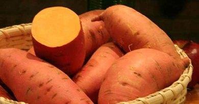 'नारंगी शकरकंद' बचा सकता है बच्चों को कुपोषण से