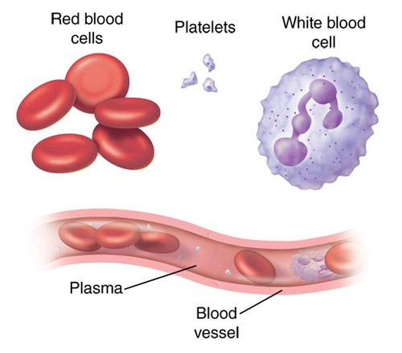 Pictures Of Blood Cells
