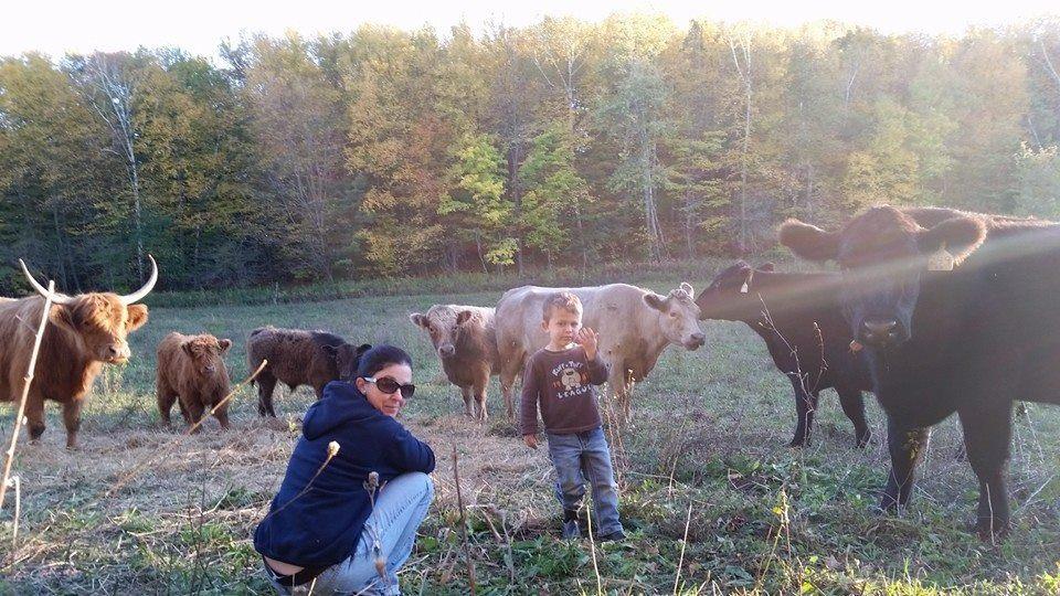 West-wind-acres-herd