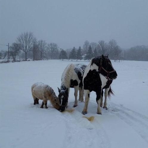 West-wind-acres-horses-winter