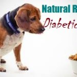Natural Remedies And Herbs For Your Diabetic Dog