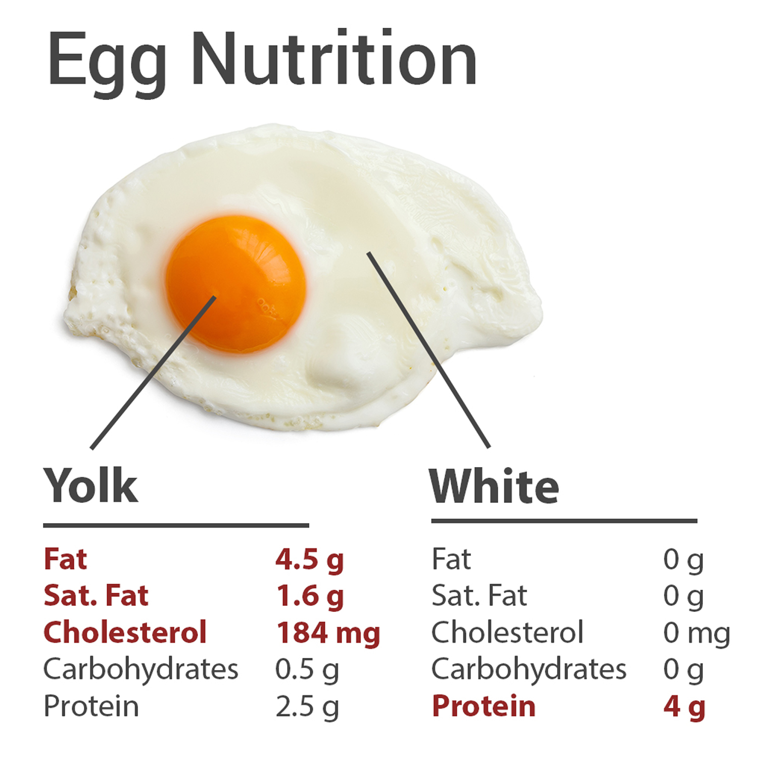 Raw Egg White Amp Egg Yolk Nutrition Facts