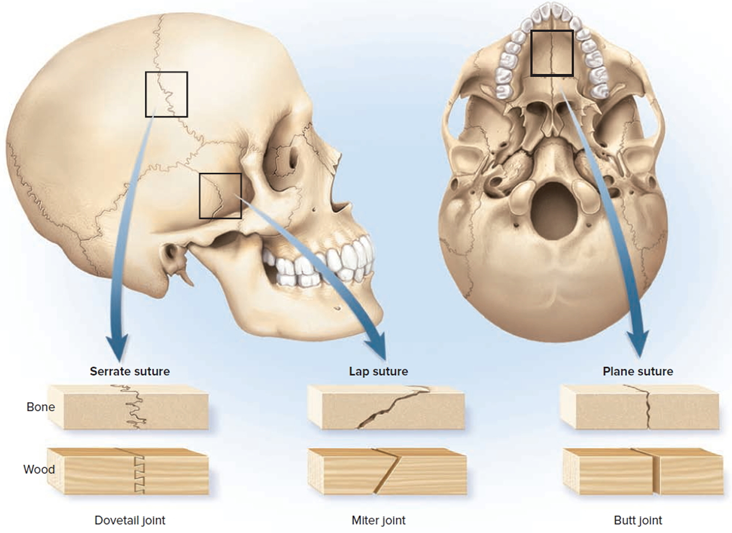 Types Amp Classification Of Body Joints