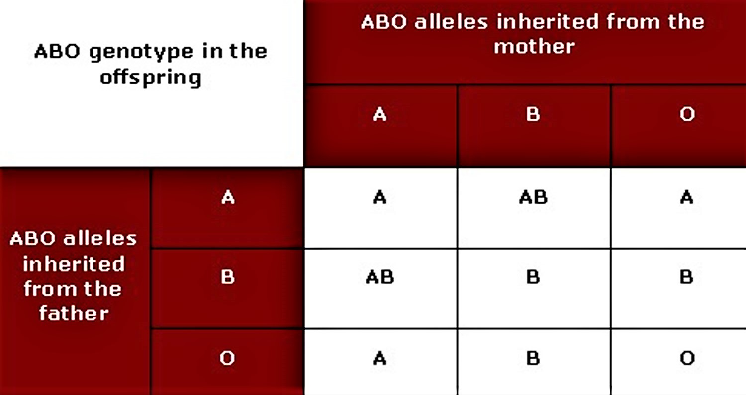 Human Blood Types Explained How Do Blood Types Work
