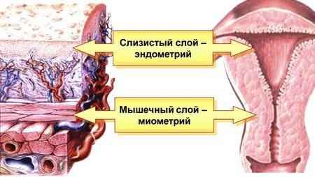 corpul subțire karne)