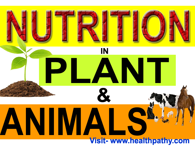 nutrition in plants and animals