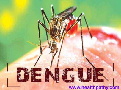 Information about dengue disease causes signs symptoms and treatment