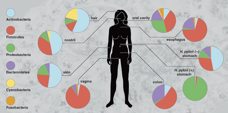 The human body – Microbes' favorite place of living