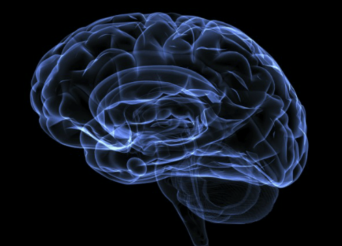 Few facts about the brain