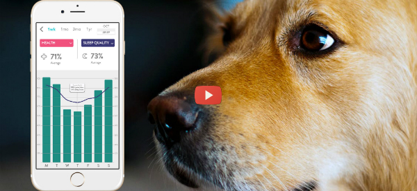Wearable for Dogs Tracks Multiple Health Factors [video]