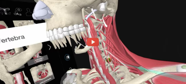 VR Cadavers Give Med Students a Leg Up [video]