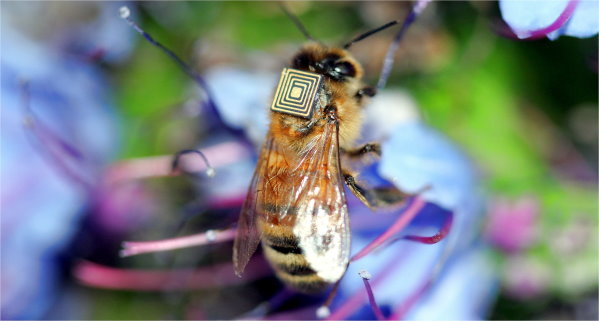 Honeybees Wear Sensors, Too