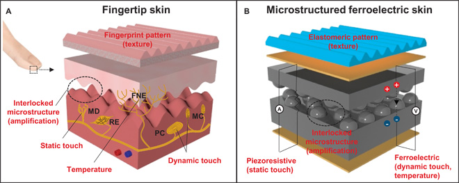 Artificial Skin Senses Touch