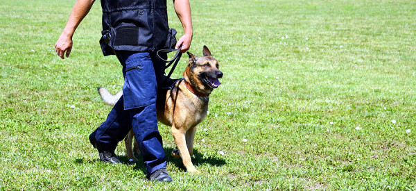 Homeland Security Tests Smart Collars