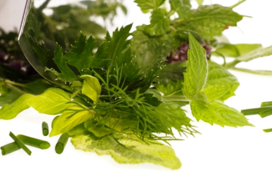 The Top 10 Herbs Of All Time