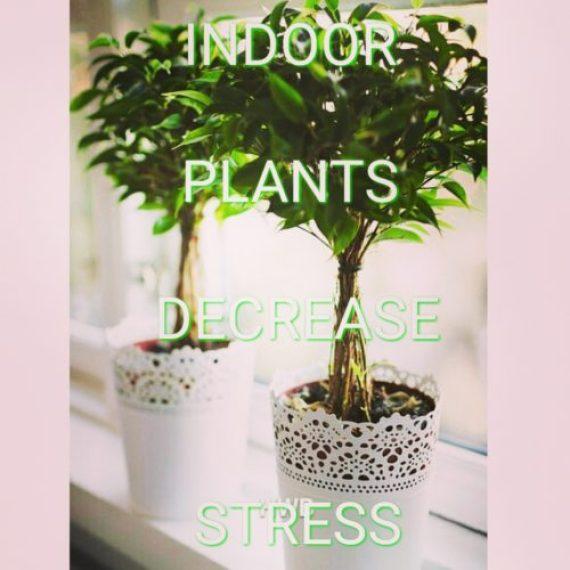 Indoor plants decrease stress