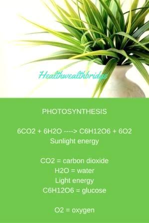 HOW PLANTS PRODUCE OXYGEN